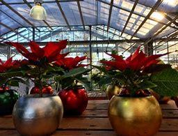 2018 Holiday Gala @ Barlow's Flower Farm | Sea Girt | New Jersey | United States