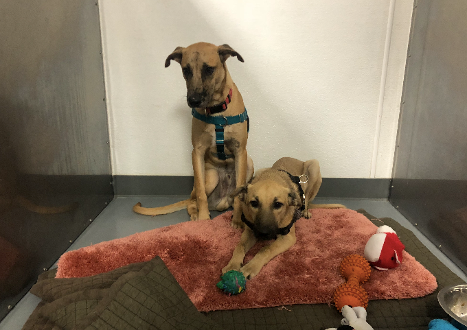 Pet Adoption in the Jersey Shore Area This Holiday Season