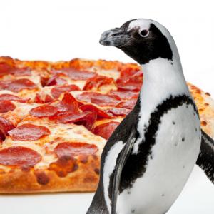 Pizza and Penguins @ Jenkinson's Aquarium