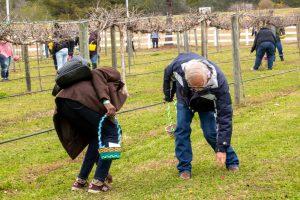 3rd Annual Easter Cork Hunt @ Fox Hollow Vineyard